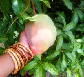 Mouthwatering Mango