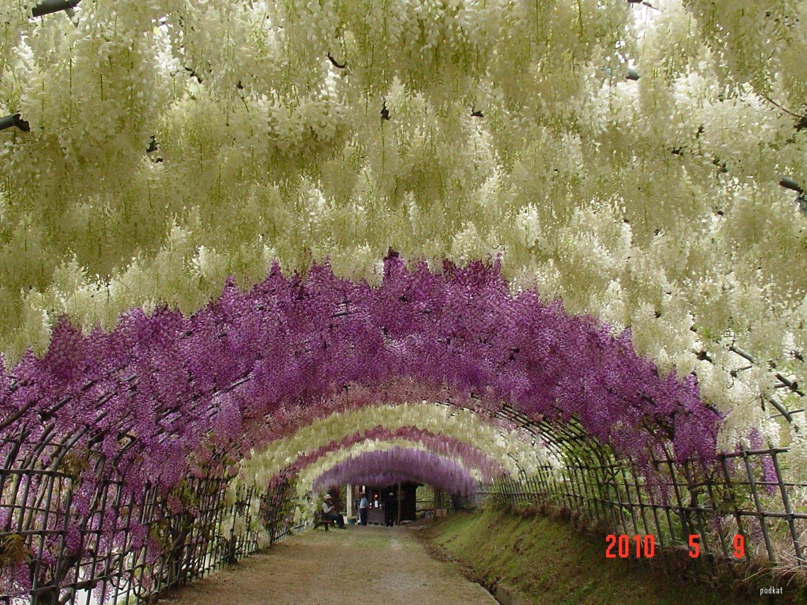 Kawachi Fuji Gardens Wisteria 1 Wonderlusting