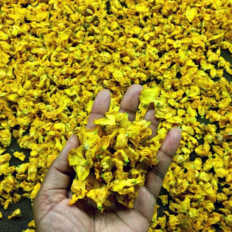 mullein petals at Herb Farm