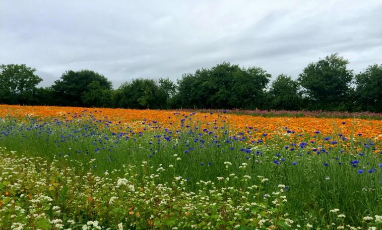 herb-farm-field
