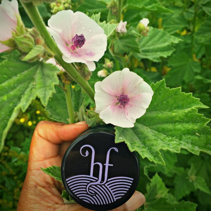 The purple mallow flowers that inspired the colour of the new Herbfarmacy logo