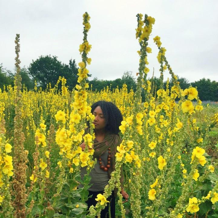 herb-farm-mullein
