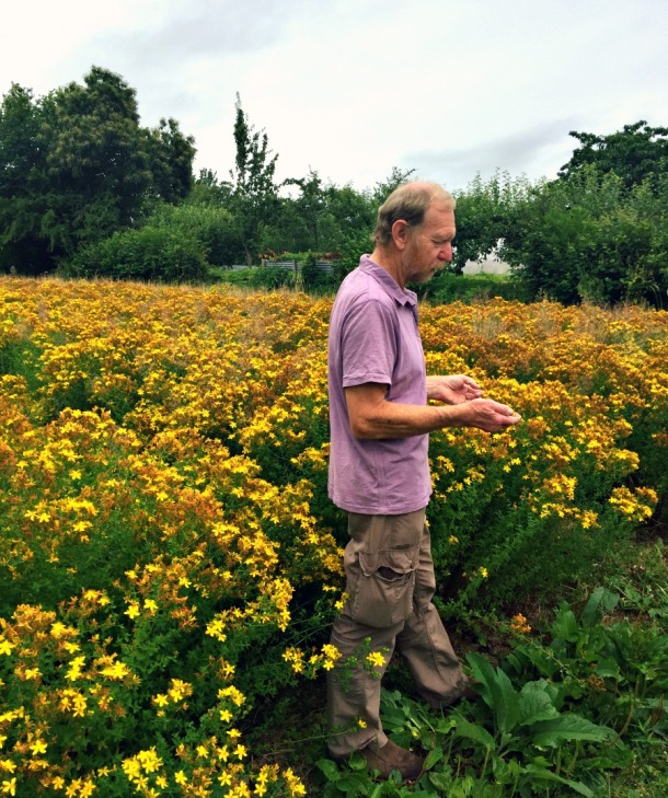 Paul Richards in a field of St John's Wort at Herb Farm